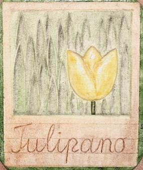 TULIPABUONA-2